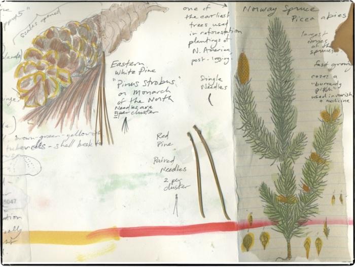 nature-journal-sample